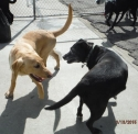 Duke and Kiddo go at it!