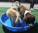Buscuit and Haywood take a dip!